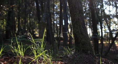 bosque-finca-quintenla